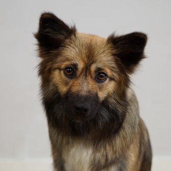 Office dog Lukka
